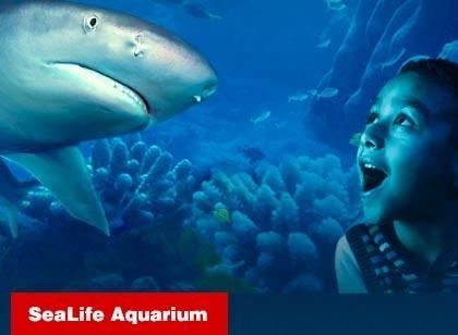 ICON 360: SEA LIFE Aquarium